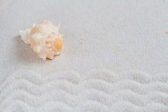 Krabb bakgrund för sand med havsskalet Arkivbild