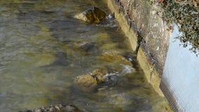 Krabb vattenkant av sjön Traunsee nära Gmunden i Upper Austria stock video