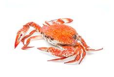 Krabba ångad skaldjur på vit bakgrund Royaltyfria Foton
