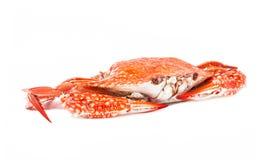 Krabba ångad skaldjur på vit bakgrund Fotografering för Bildbyråer