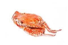 Krabba ångad skaldjur på vit bakgrund Royaltyfri Foto