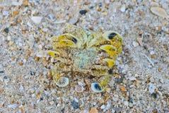 krabba över vänd royaltyfri bild