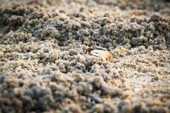 Krabba Arkivbild