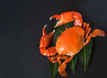 krabba royaltyfri foto