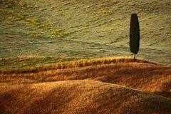 Krabba breownhögar med det ensamma patienscypressträdet, suggafält, åkerbrukt landskap, Tuscany, Italien Royaltyfria Bilder