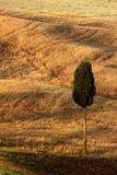 Krabba bruna högar med patienscypressträdet, suggafält, åkerbrukt landskap, Tuscany, Italien Royaltyfri Foto