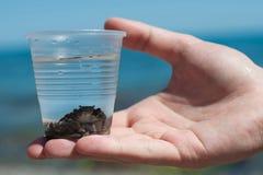 Krabba i ett exponeringsglas. Royaltyfria Bilder
