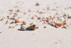 Krabba i ett ljus - grönt skal Skaldjur på stranden döljer i ett s Royaltyfri Foto