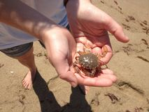 Krabba i hand Royaltyfri Fotografi