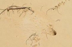 Krabba i hem Arkivbilder