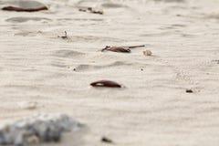 Krabba i sanden Arkivbilder