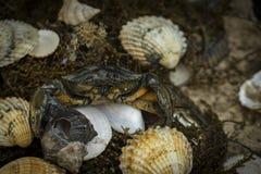 Krabba i snäckskal på den smutsiga sandbakgrunden Royaltyfri Fotografi