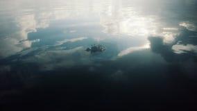 Krabba i strand med molnreflexion royaltyfri bild