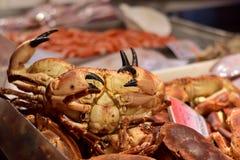 Krabba på den Chioggia fiskmarknaden Royaltyfri Fotografi