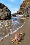 Krabba på en Rocky Beach Arkivfoto