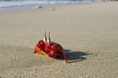 Krabba på en strand royaltyfri fotografi