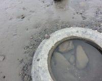 Krabba på ett gummihjul Arkivbilder