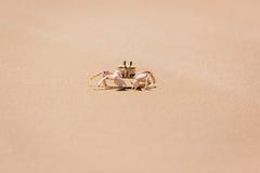 Krabba på kusten Arkivfoto