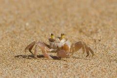 Krabba på sanden Royaltyfri Bild