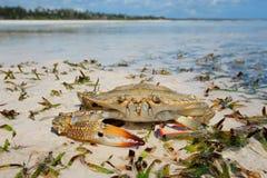 Krabba på strand Royaltyfri Fotografi