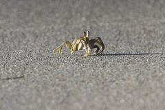 Krabba på stranden Arkivfoton