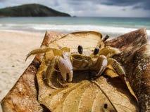 Krabba på stranden Royaltyfria Foton