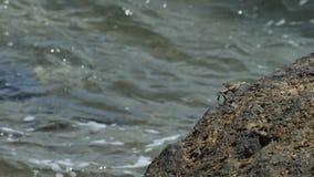 Krabba på vagga på stranden lager videofilmer