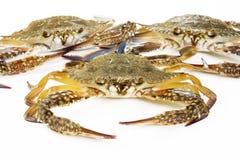 Krabba på white Arkivfoton