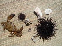 Krabba, skal och havsgatubarn Fotografering för Bildbyråer