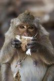 Krabba som äter macaquen Royaltyfria Foton