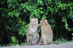 krabba som äter macaquen Arkivbild