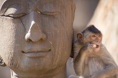 Krabba som äter macaquen på Buddhastatyn Royaltyfria Bilder