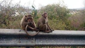 krabba som äter macaquen thailand Fotografering för Bildbyråer