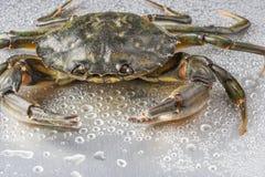 Krabba stilleben, skaldjur, jordluckrare, skaldjur, mat som är ny, studio Royaltyfri Foto