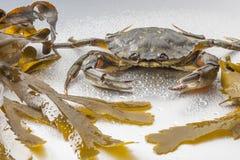 Krabba stilleben, skaldjur, jordluckrare, skaldjur, mat som är ny, studio Arkivfoto