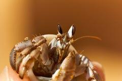 Krabba tät stående upp Royaltyfri Fotografi