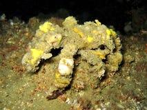 krabbadekoratör Arkivbilder