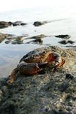 krabbahav Arkivfoton
