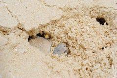 Krabban döljer i sand royaltyfri fotografi