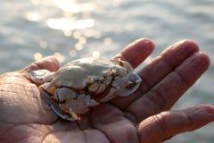 Krabban på handen Arkivfoton