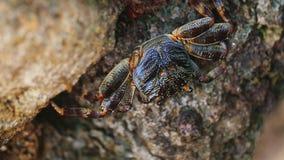 Krabban sitter på en vagga på kusten, slose-upvideo arkivfilmer
