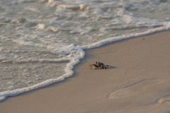 Krabban som promenerar stranden med bubblor av havet, vinkar arkivbild