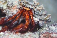 krabbaskal Arkivfoto