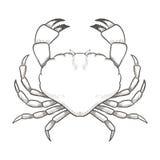 Krabbateckning på vit bakgrund Hand dragen översiktsskaldjurillustration Fotografering för Bildbyråer