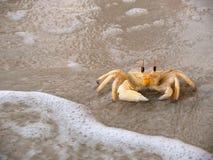Krabbe Stockbild