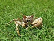 Krabbe Lizenzfreie Stockfotos