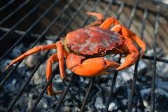 Krabbe auf dem Grill Lizenzfreie Stockfotografie