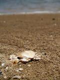 Krabbe auf dem Strand lizenzfreie stockbilder