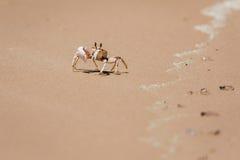 Krabbe auf dem Ufer Lizenzfreies Stockfoto