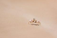 Krabbe auf dem Ufer Lizenzfreie Stockfotografie